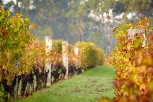 Autumn in the Margaret River Wine Region