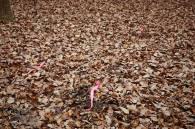 Pink streamers mark the spots where Lola has smelt truffle...