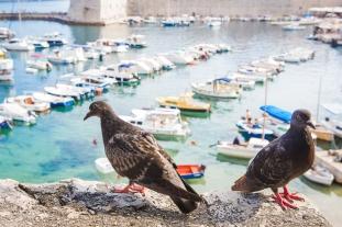 033 Dubrovnik 140812 Jessica Wyld